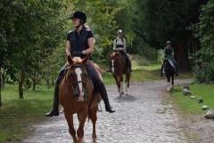Pferde Reiten
