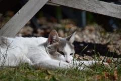 Katze entspannt sich