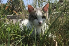 Lisa im Gras