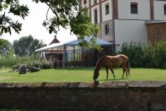 Obstwiese mit Pferd