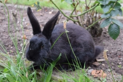 Kaninchen im Garten