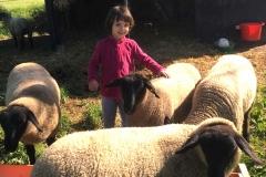 Laura bei den Schafen